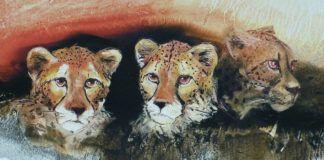 Animals Illustrations