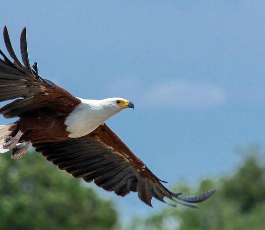 Eagles Background