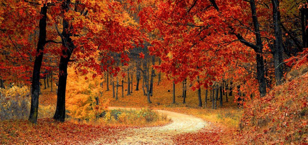 autumn colors fall season