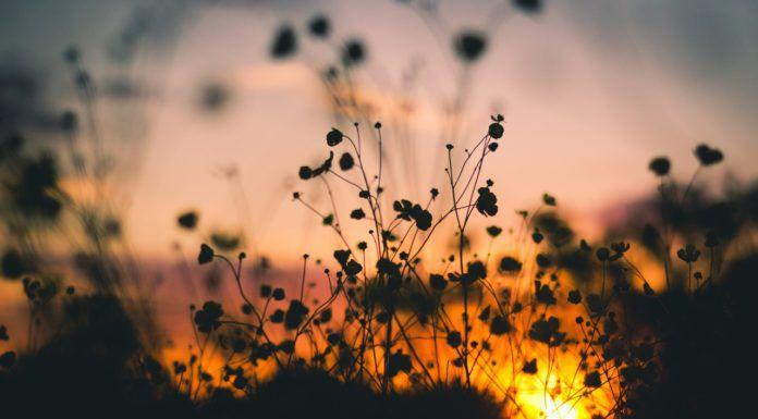 flowers silhouette nature sunset