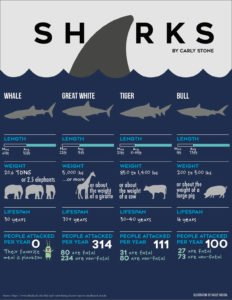 Shark Facts Infographic Comparing other Animals and Treat to Humans