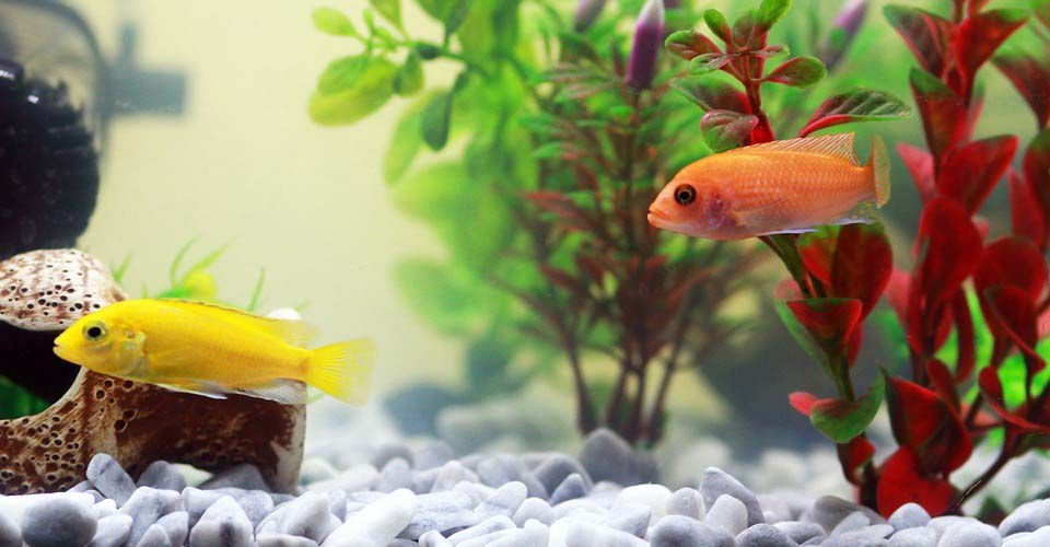 Fish Tank Background