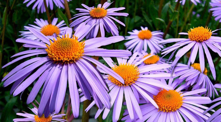 Image Flowers