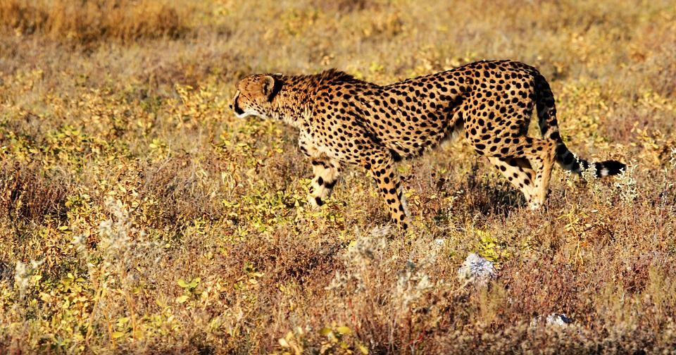 Leopard Print Background