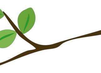 Vector Leaf