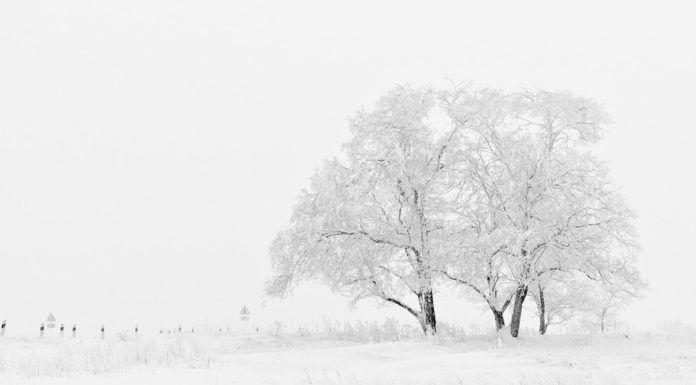 White Picture