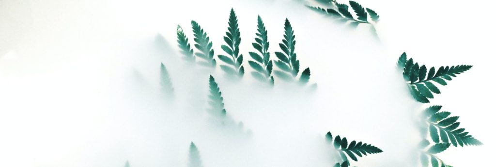 Green leaves from a mist - plain white backgrounds