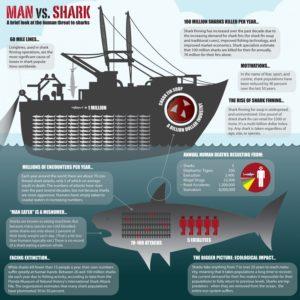 Shark Background - Man versus Shark Facts Infographic